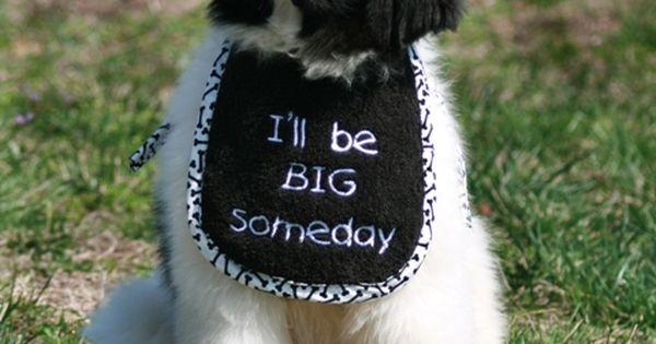 Personalized name or short saying puppy drool bib - Terranova ropa ...