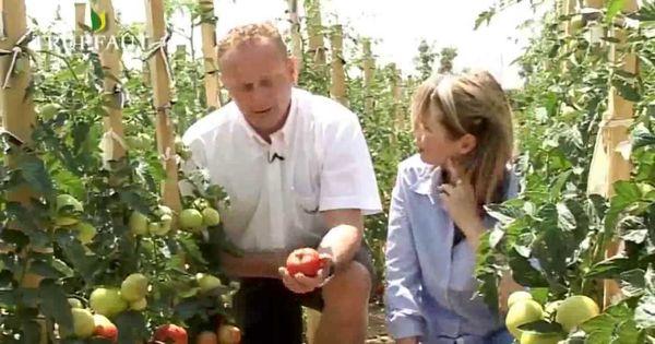 potager tout savoir sur la tomate potager et jardinage pinterest conservation. Black Bedroom Furniture Sets. Home Design Ideas