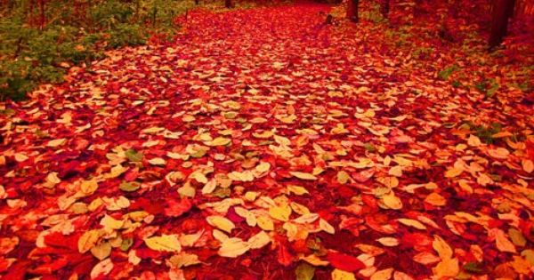 Nature's red carpet