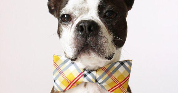 handmade dog accessories - bow tie