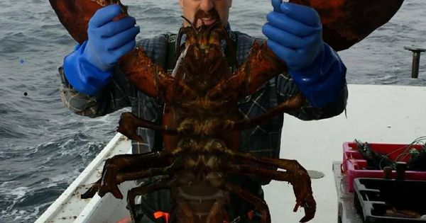 35 pound lobster caught of the Nova Scotia waters ,Yarmouth | Our Pets & Other Interesting ...