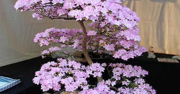 Picture 3 Of 5 Bonsai Plants Bonsai Garden Bonsai Seeds