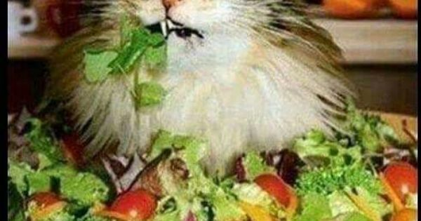 This #salad tastes like i'd rather be #fat #letsgetwordy # ...