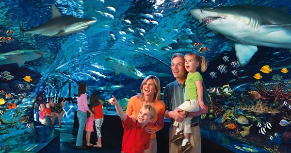 Ultimate Guide Of Ripleys Aquarium Coupons And Discount
