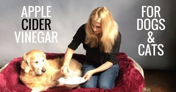 Bladder Infection Remedies For Dogs Cat Fleas Vinegar Cat Remedies