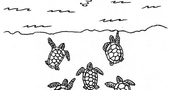 sea turtle and other aquatic animals coloring pages preschool learning ideas pinterest. Black Bedroom Furniture Sets. Home Design Ideas