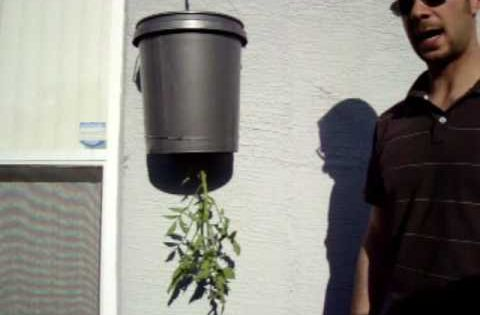 Hanging Bucket Planter For Tomatoes! Cheap Garden. | Garden, My Office |  Pinterest | Gardens, Planters And Homesteads