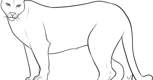 coloring pages mountain lion - photo#19