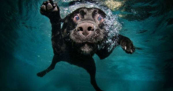 Seth Casteel does underwater dog photography - what a genius idea! This