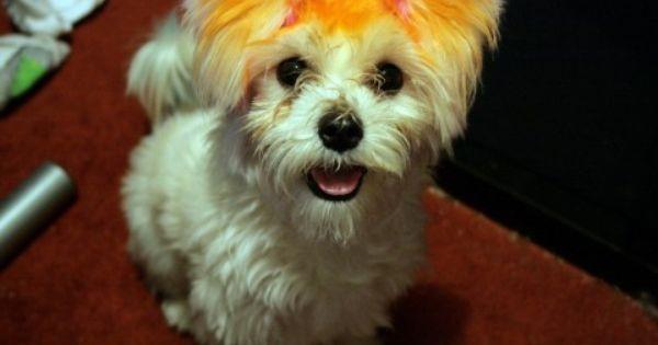 Coloring Dog Food