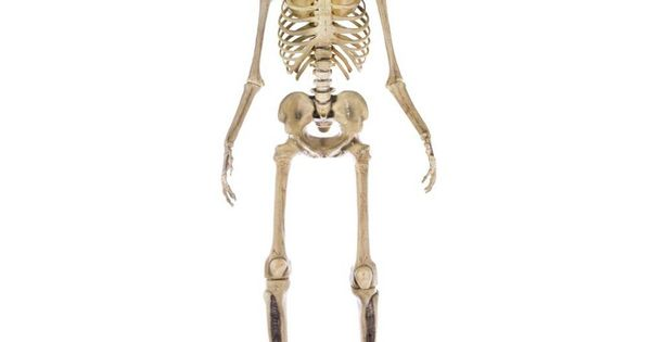 Home Accents Holiday 12 Ft Giant Sized Skeleton With Lifeeyes 5124738 The Home Depot In 2020 Halloween Scene Halloween Skeletons Skeleton Decorations