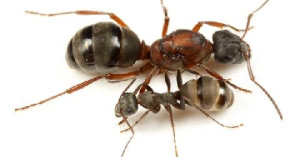 凹凸感のあるワンルーム空間奥へと変則的につながる アリの巣