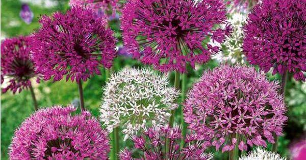 ails d 39 ornement en m lange outdoor pinterest fleur. Black Bedroom Furniture Sets. Home Design Ideas