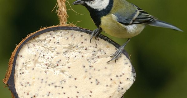 Birds love these buggy coconut shell treats rspb what for Whole coconut bird feeders