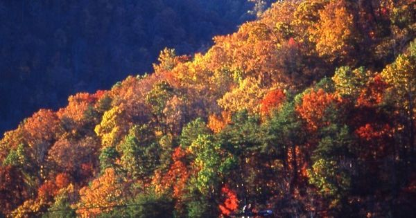 Fall color in the Great Smoky Mountains, Gatlinburg, TN