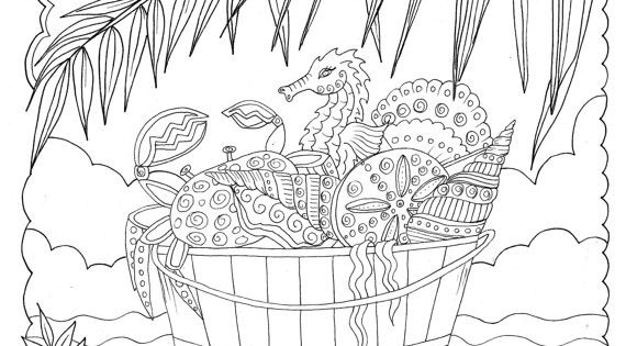 shells to color and relax coloring book fun  relaxing and