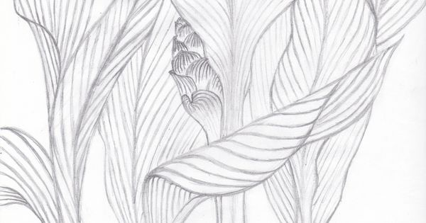 Contour Line Drawing Leaf : Visualization basics tropical leaves contour drawing from