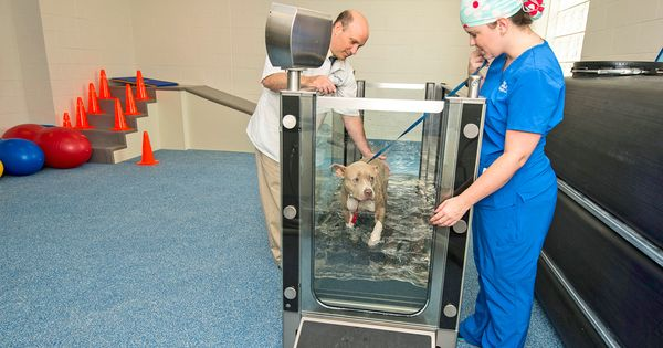 Canine Rehabilitation Room Hospital Design Hospital Design Veterinary Hospital Veterinary