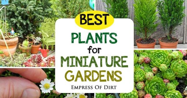 How to Choose Living Plants for a Miniature Garden Miniature