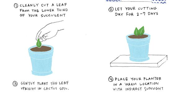 How To Make Houseplant Food With Kitchen Scraps