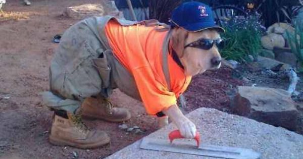 Construction Worker Dog Costume Idea Pet Costumes Dog Halloween Costumes Pets