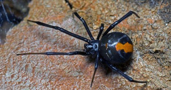 Flesh Eaters 5 Cannibalistic Animals Insekter Fjarilar