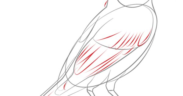 How to draw a robin bird step by step. Drawing tutorials ...