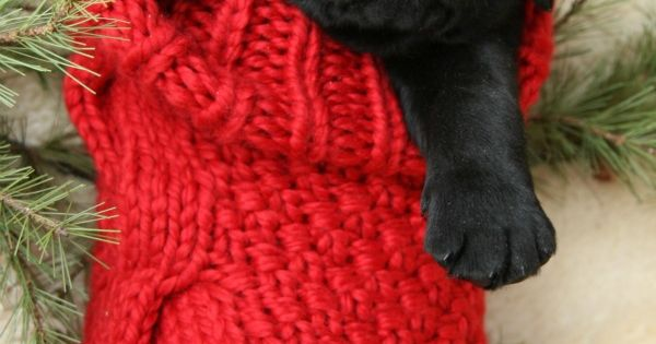 Adorable puppy in a Christmas stocking! How perfect to get on Christmas