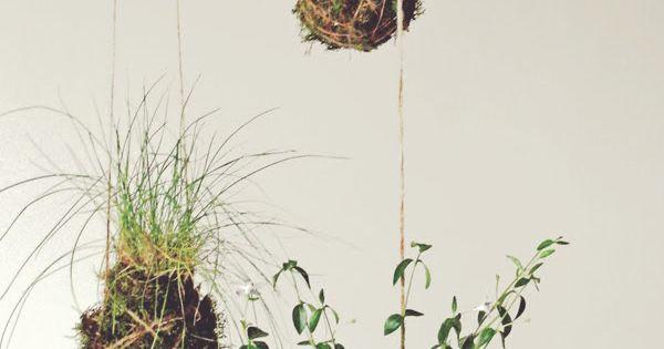 "Hanging Garden (babylon) project // diy project: ""kokedama"" string garden / Design*Sponge"