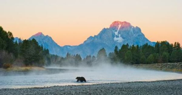 The Art Of Wildlife Photography With Tom Mangelsen Wildlife Photography Grizzly Bear Tom Mangelsen