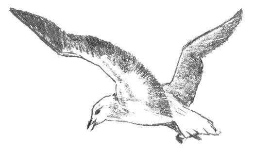 Flying Seagull Drawing Art Ideas Pinterest Bird