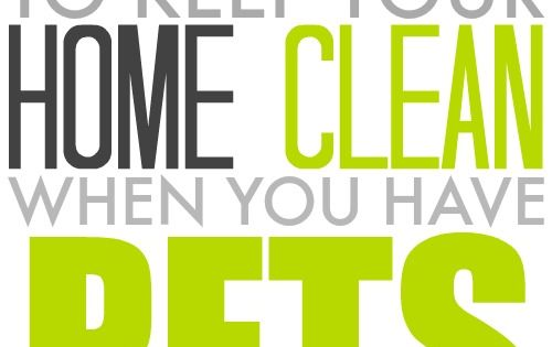how to keep home clean with a dog