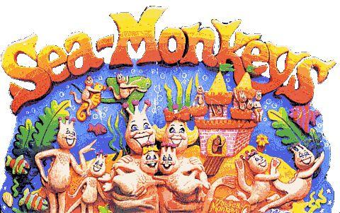 Sea Monkeys Sea Monkeys Monkey Pictures Monkey Art
