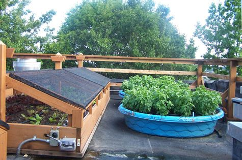 Using a kiddie pool as a container garden cheap and easy for Pool garden restaurant