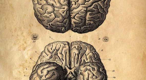 12x16 Vintage Anatomy. Brains poster. Human Body. Zombies. Horror. Science -002. $20.00,