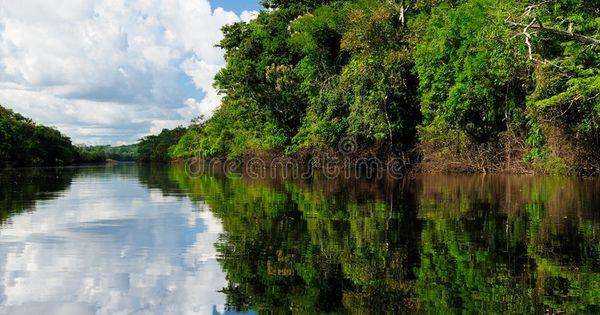 Amazon River Landscape In Brazil Amazonas Landscape The Photo Present Amazon R Sponsored Landscape River Amazon Amazon River River Amazon Rainforest