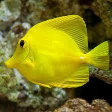 Not Found Saltwater Aquarium Fish Reef Safe Fish Colorful Fish