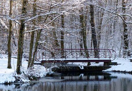 冬天 雪 树木 池塘 桥梁 冰皮月饼 白 性质 公园 outdoor nature beautiful