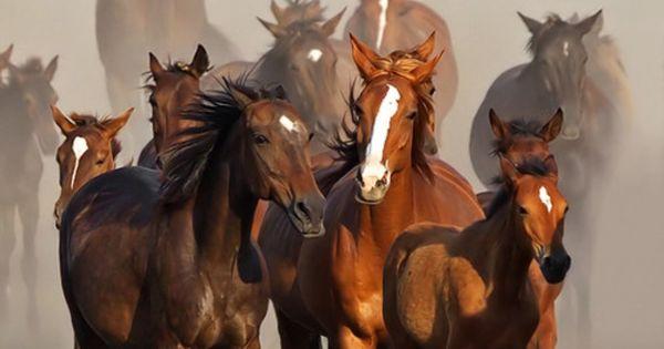 black hors