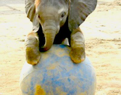 Baby Elephant, so cute baby Animals Baby Animals
