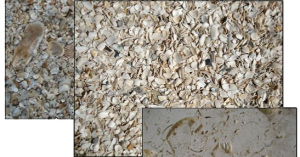 Images Of Tabby Finish Stucco Shell Landscape Shell