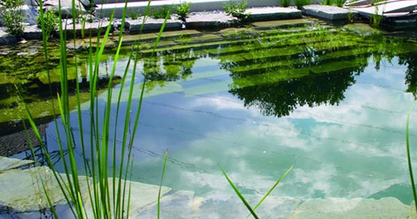 La piscine naturelle barbotons avec les grenouilles for Combien coute une piscine naturelle