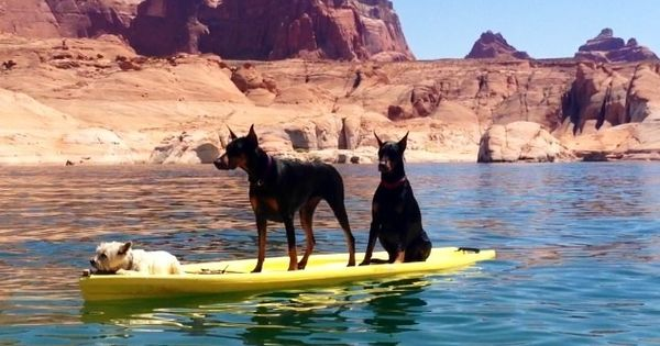 Lake powell lakes and dogs on pinterest