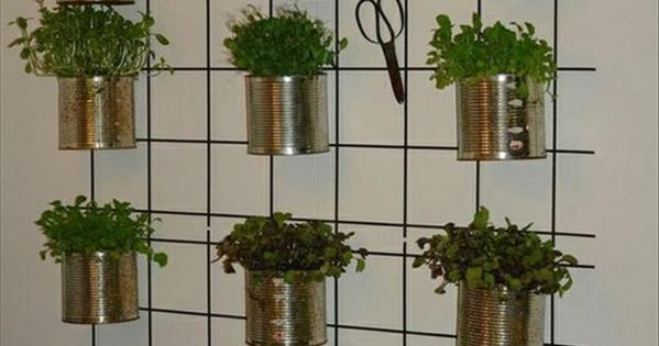 Wall Herb garden for bright spot in kitchen cool idea! paint cans
