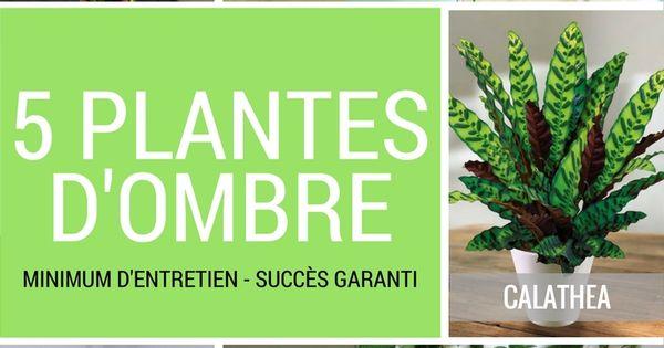 5 plantes vertes d 39 ombre pour l 39 int rieur jardinage et. Black Bedroom Furniture Sets. Home Design Ideas