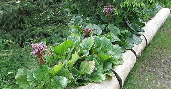 Hier Ein Paar Nette Ideen Aus Dem Garten In Eichwalde Wo Wir Neulich Zum Giersch Jaten Angetreten Waren Tote Ba Beeteinfassung Beetumrandungen Baume Pflanzen