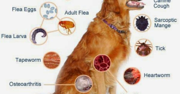 Do You Know How Your Dogs And Cats Pick Up Fleas Dog Illnesses