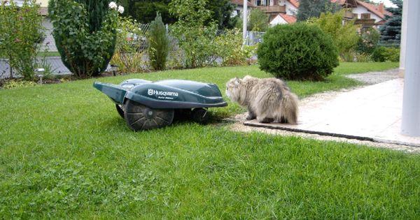 automower ist kissing a cat automower rasenroboter rasenm her roboter pinterest cats. Black Bedroom Furniture Sets. Home Design Ideas