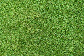 雑草が生える隙間もないクラピア クラピア 新築 庭 和モダン 庭園