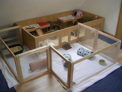 Guinea Pig Living Space For Piggies Pinterest Cavy